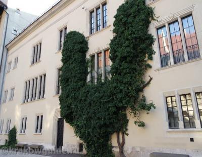 Вечнозеленый куст на Вавеле