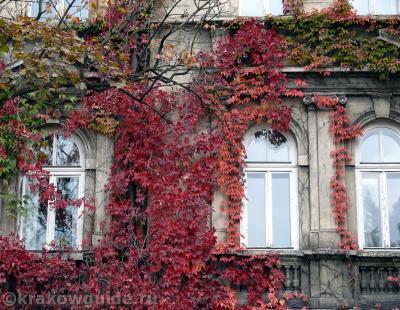 Осенние окна