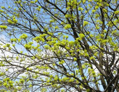 Весна в Кракове